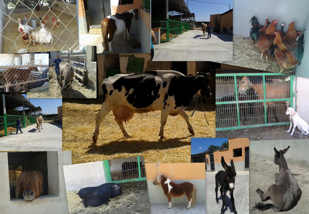 COLLAGE ANIMALES2