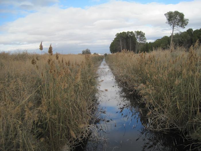 Vota - Adios laguna, adios - Concurso Fotografía Científica