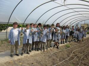 Recogemos las cebollas en nuestro invernadero.
